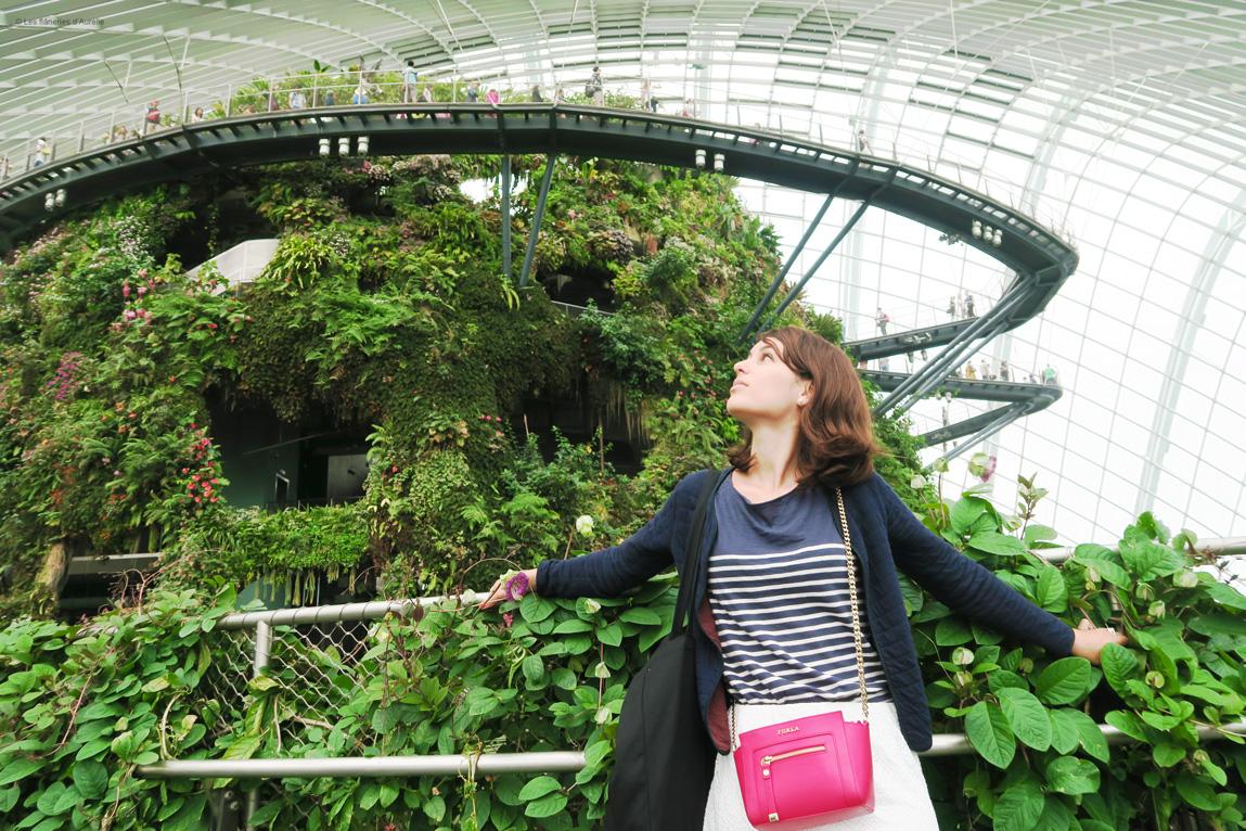 cloudforest4