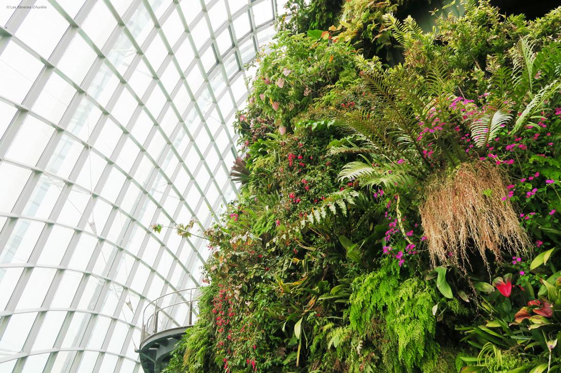 cloudforest6