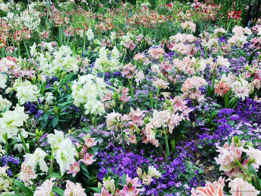 flowerdome10