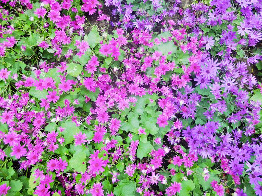 flowerdome11
