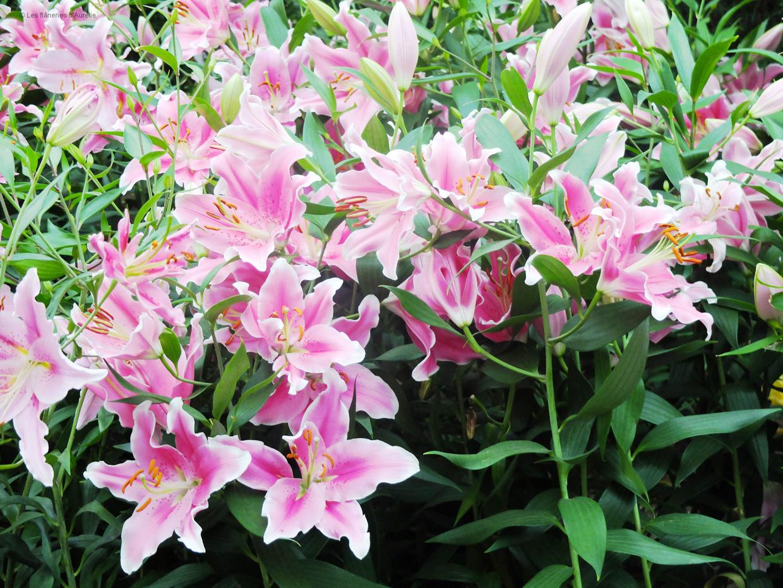 flowerdome12