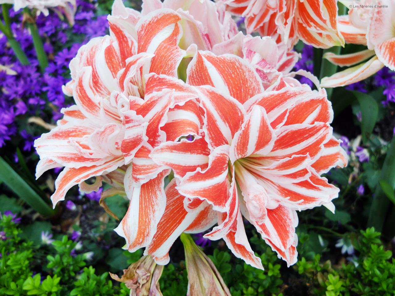 flowerdome4