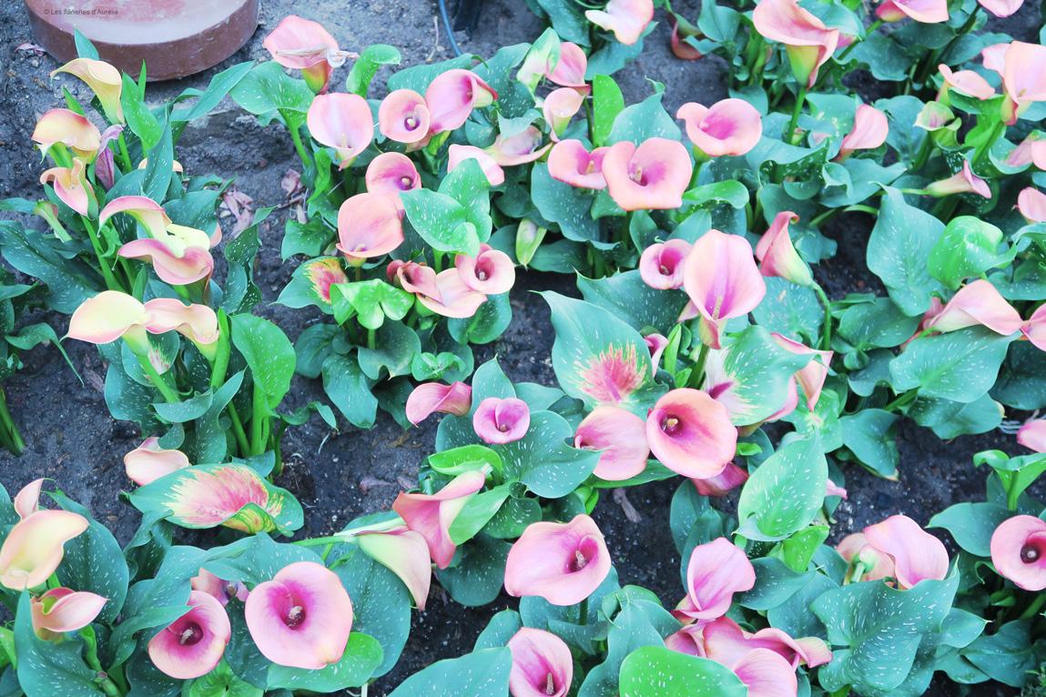 flowerdome8