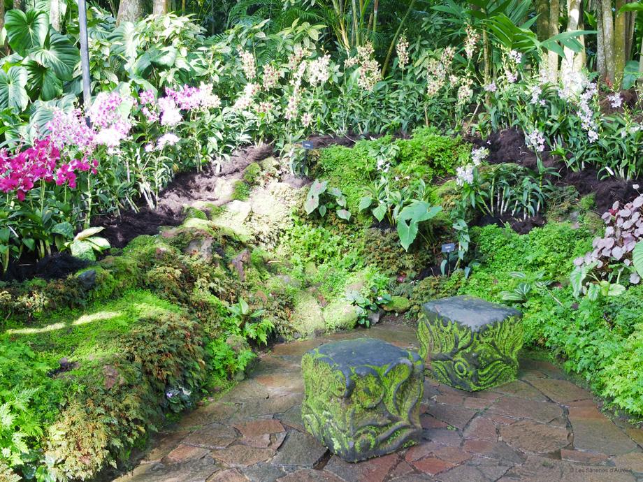 orchidgarden17