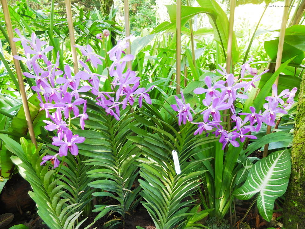 orchidgarden2