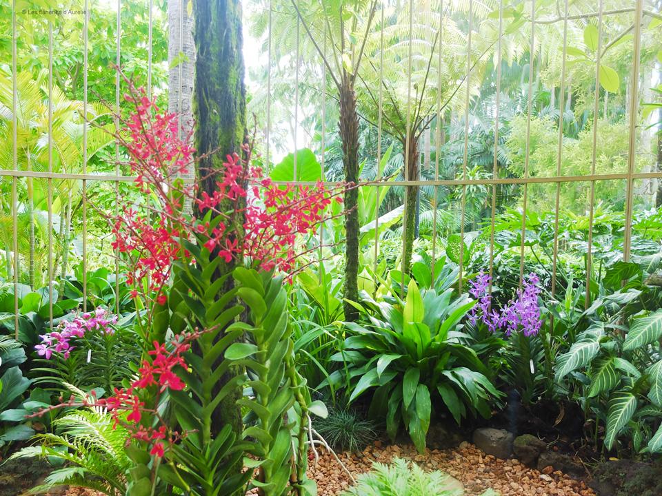 orchidgarden5