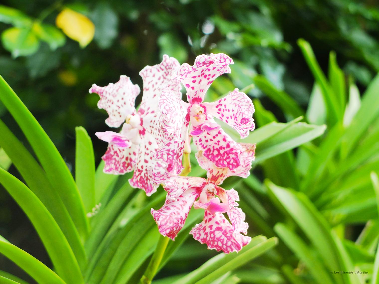 orchidgarden6