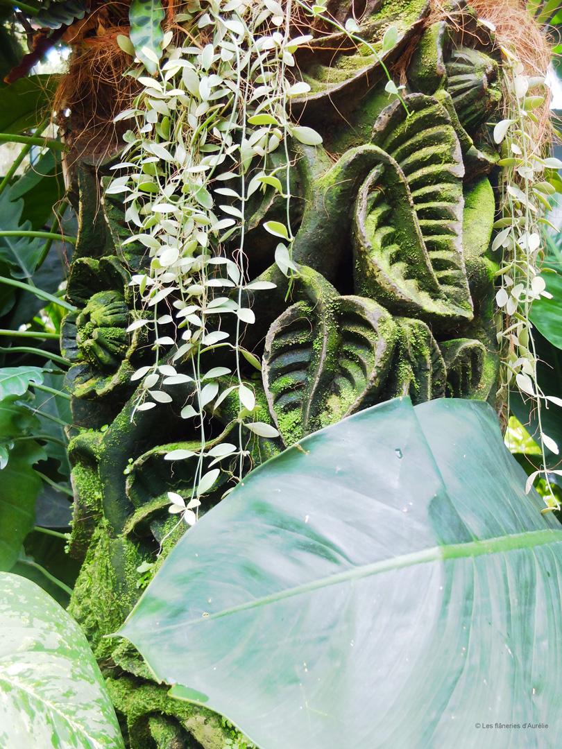orchidgarden8
